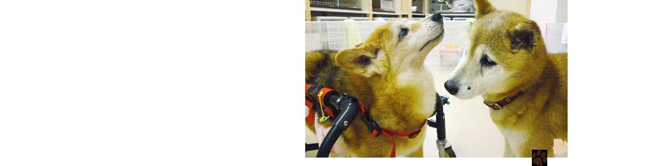 サービスのご案内 用途に合わせてご利用いただける「老犬介護施設」で大切なワンちゃんを介護していきませんか?